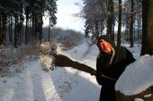 Au cours d'une promenade dans le Grand-Bois sur les hauteurs de Vielsalm, une rencontre inattendue est toujours possible ...